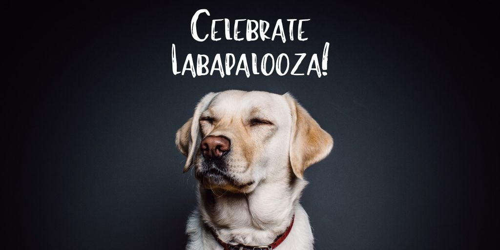 For Labapalooza dogs of all shapes and sizes descend on downtown...mostly labs! It's a celebration fundraiser for Lab Rescue OK! Come on out and show your support!