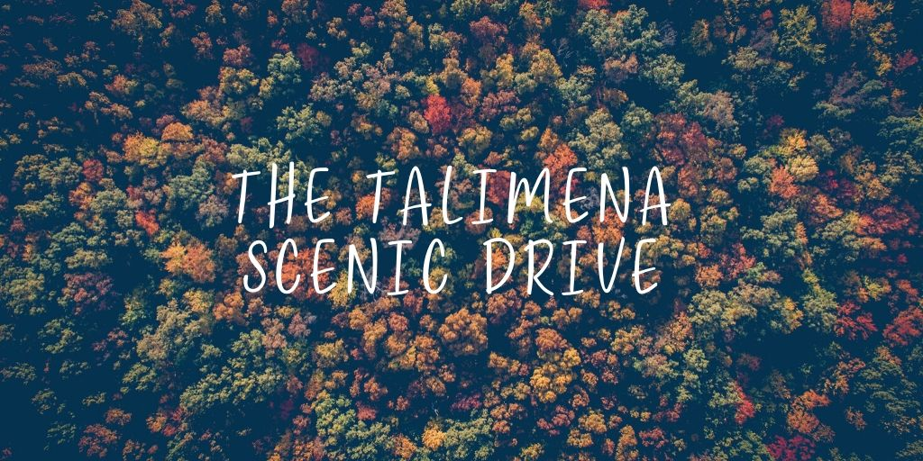 Autumn is in full swing! Looking for the best way to see this year's foliage? The Talimena Scenic Drive is a scenic 54-mile stretch of highway that will take you through the Ouachita National Forest.